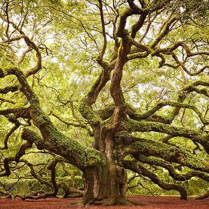 thumb_arbre-2
